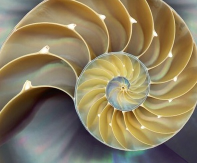 FibonacciShell